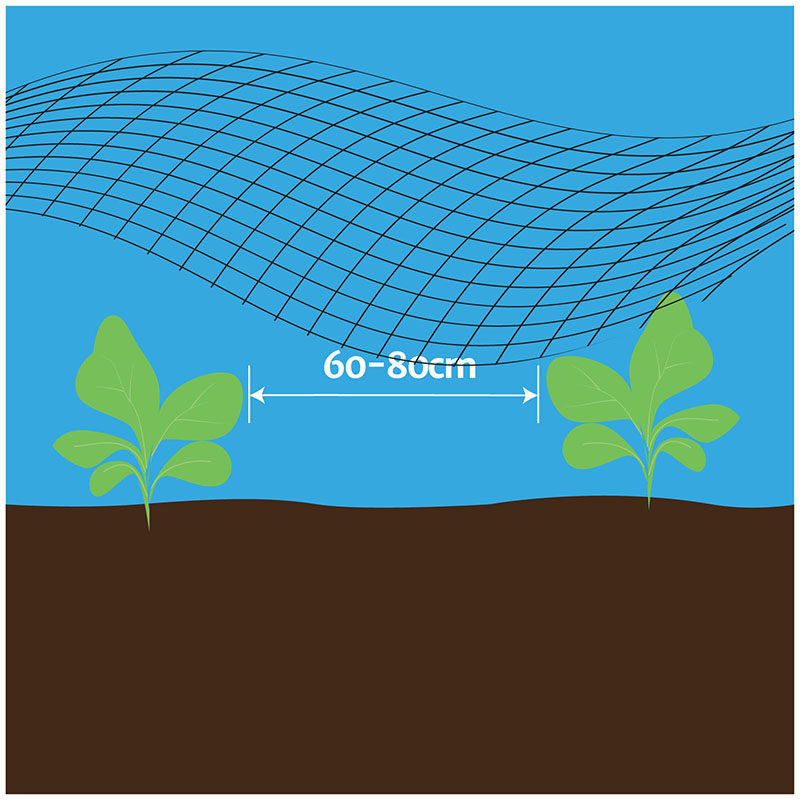 how-to-grow-3